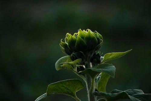 Foto profissional grátis de ecológico, escuro, flor, flor fechada