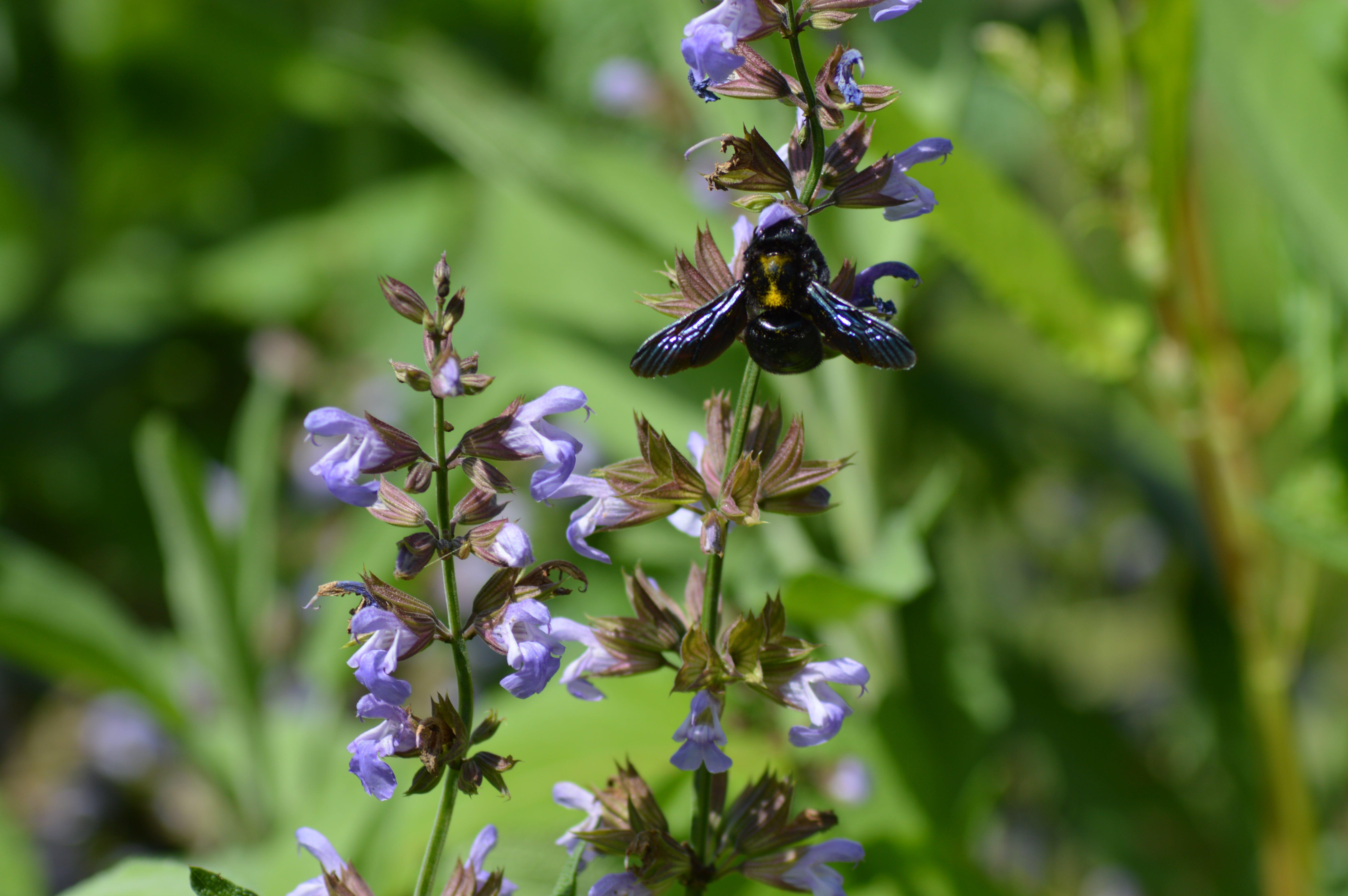 Free stock photo of bee, environment, flowers, greenery