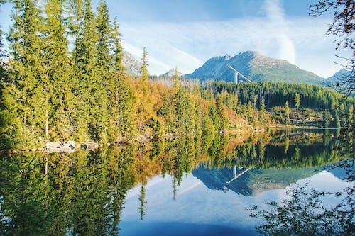 Kostenloses Stock Foto zu bäume, berg, friedlich, grün