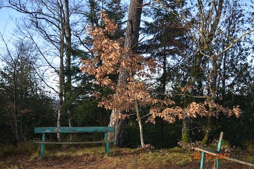 Ảnh lưu trữ miễn phí về băng ghế, màu xanh lá, Thiên nhiên, trái cam