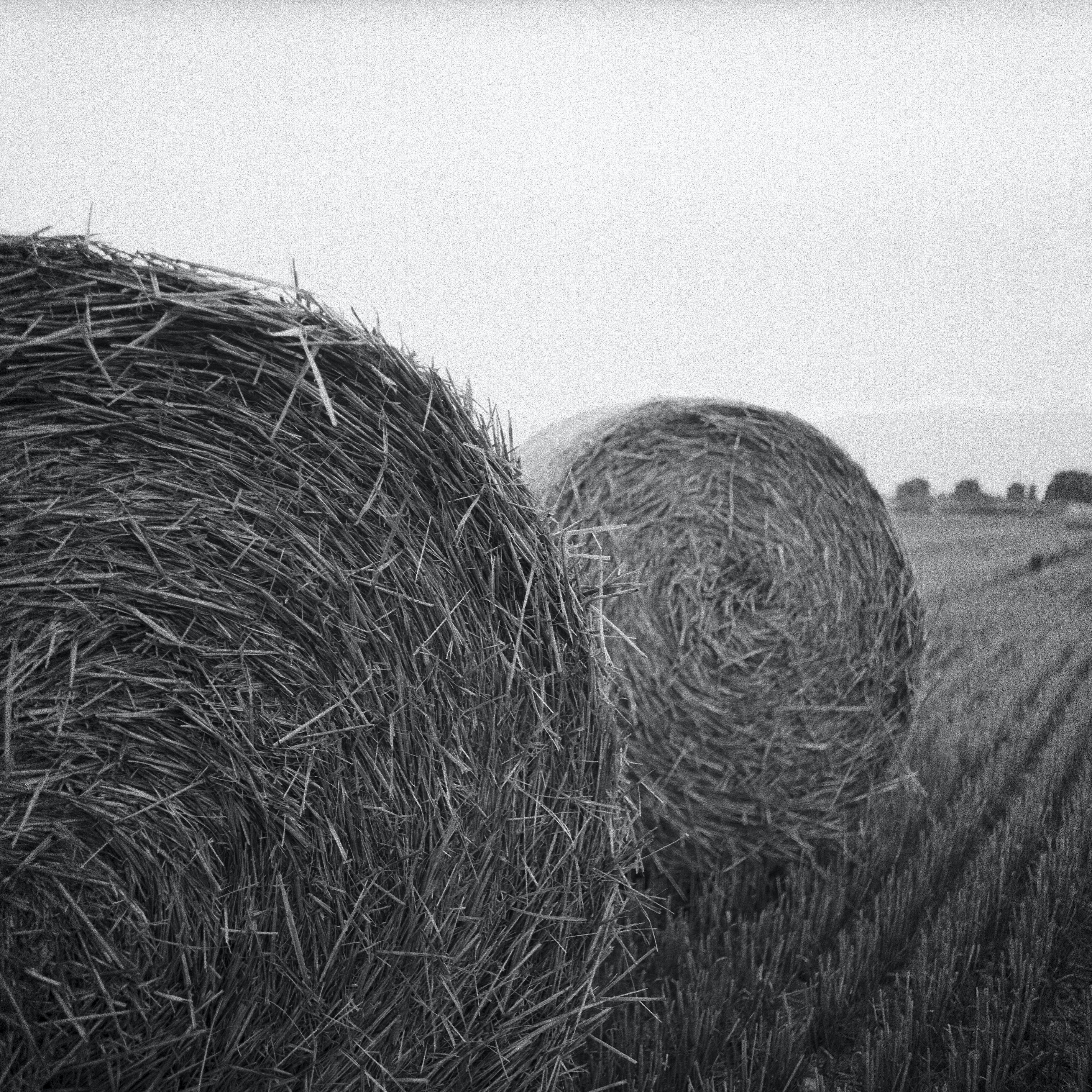 Gray Scale Photo of Haystack on Field