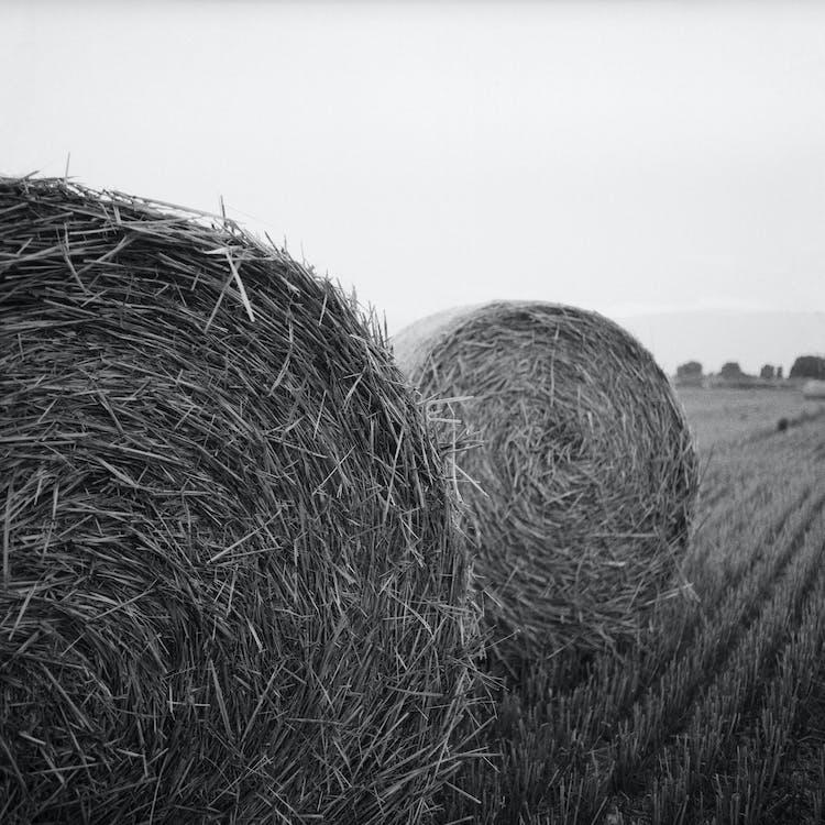 αγρόκτημα, ασπρόμαυρο, άχυρα