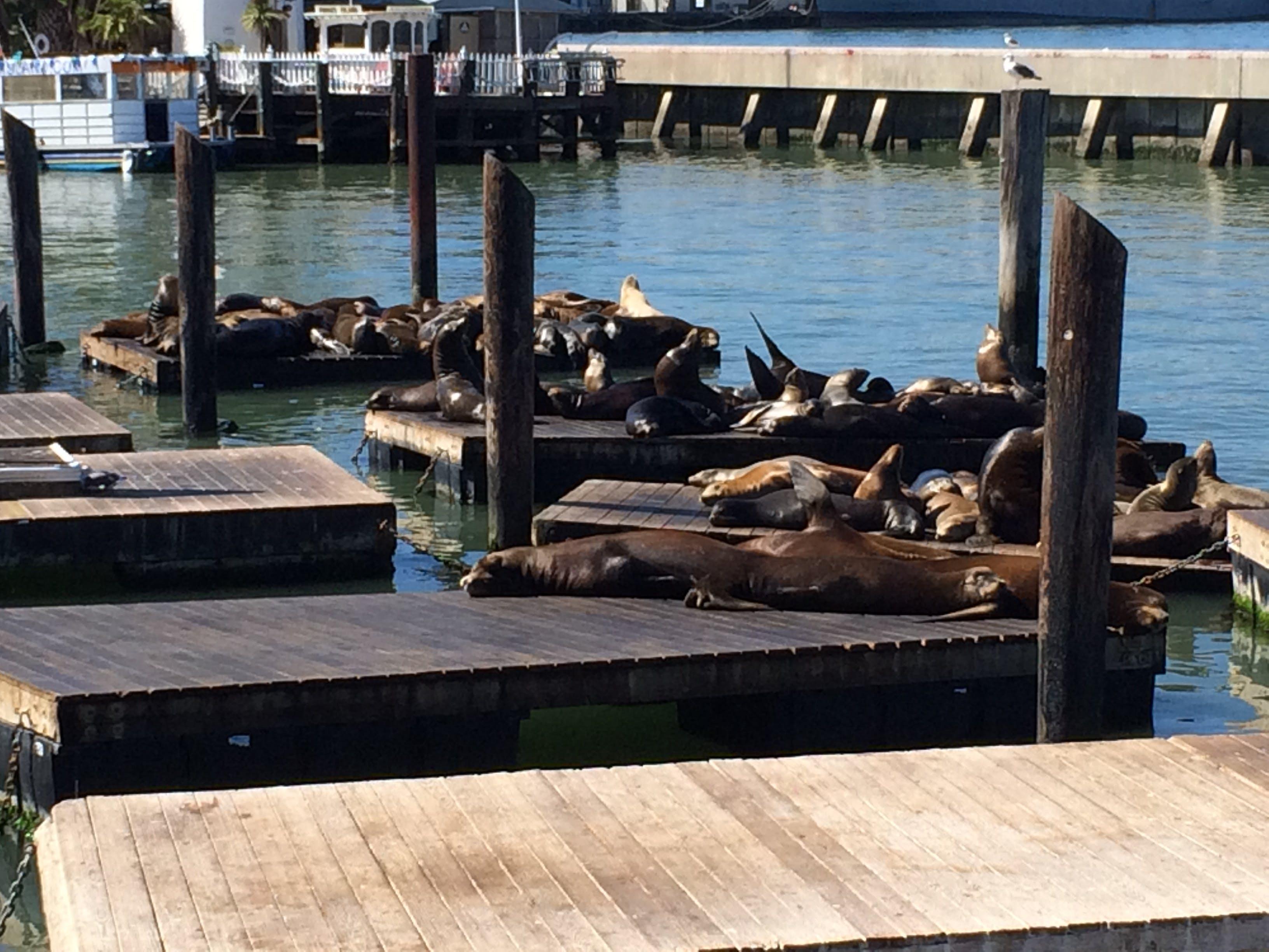 Free stock photo of port, sea, sea lions