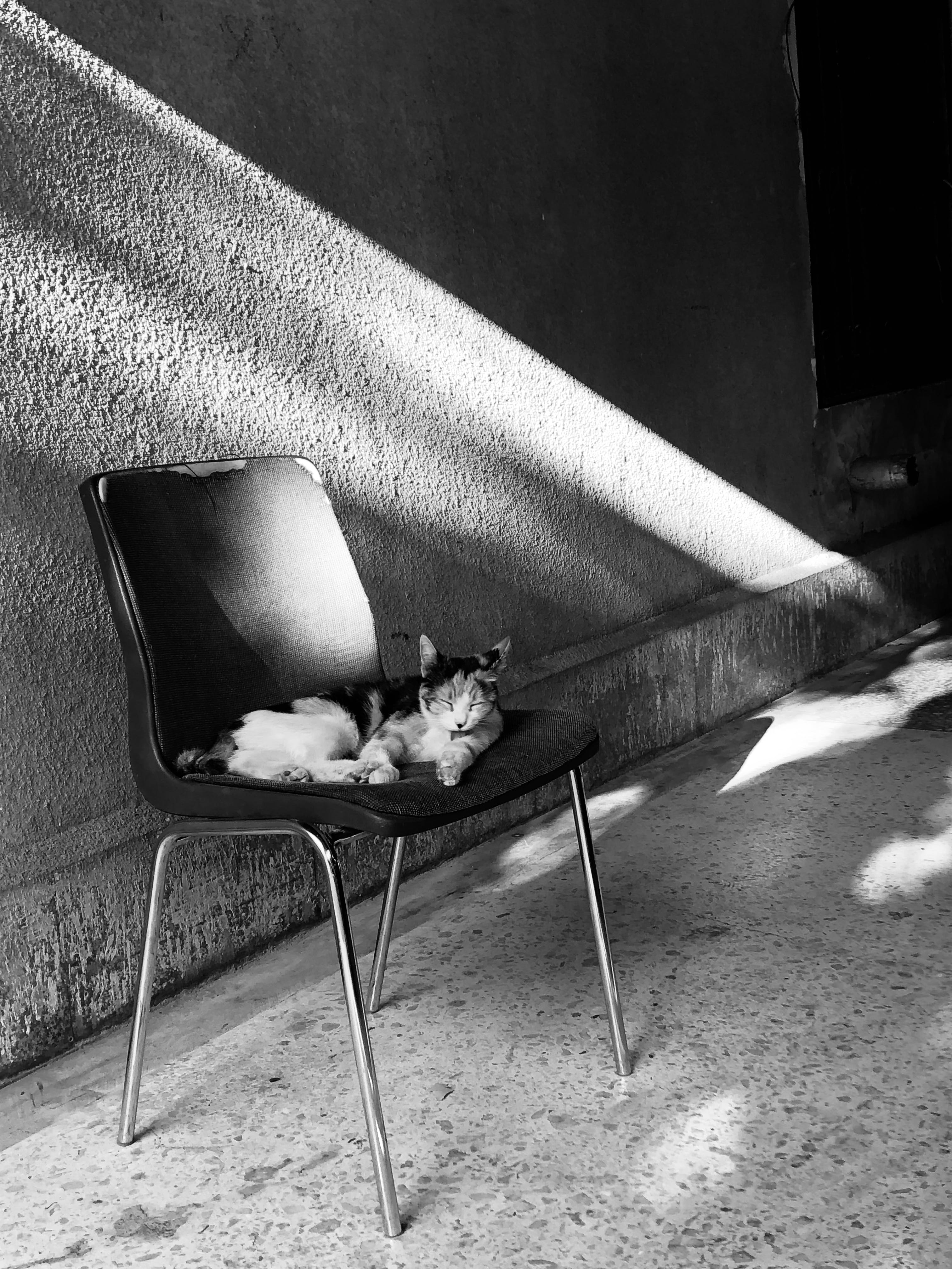 Grayscale Photography of Cat on Black Chair