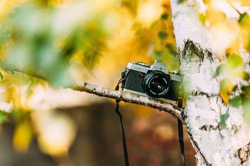 Gratis arkivbilde med fotografi, gren, kamera, minolta