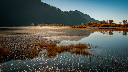Δωρεάν στοκ φωτογραφιών με pitt meadows, pitt λίμνη, pitt-addington βάλτο, αντανάκλαση