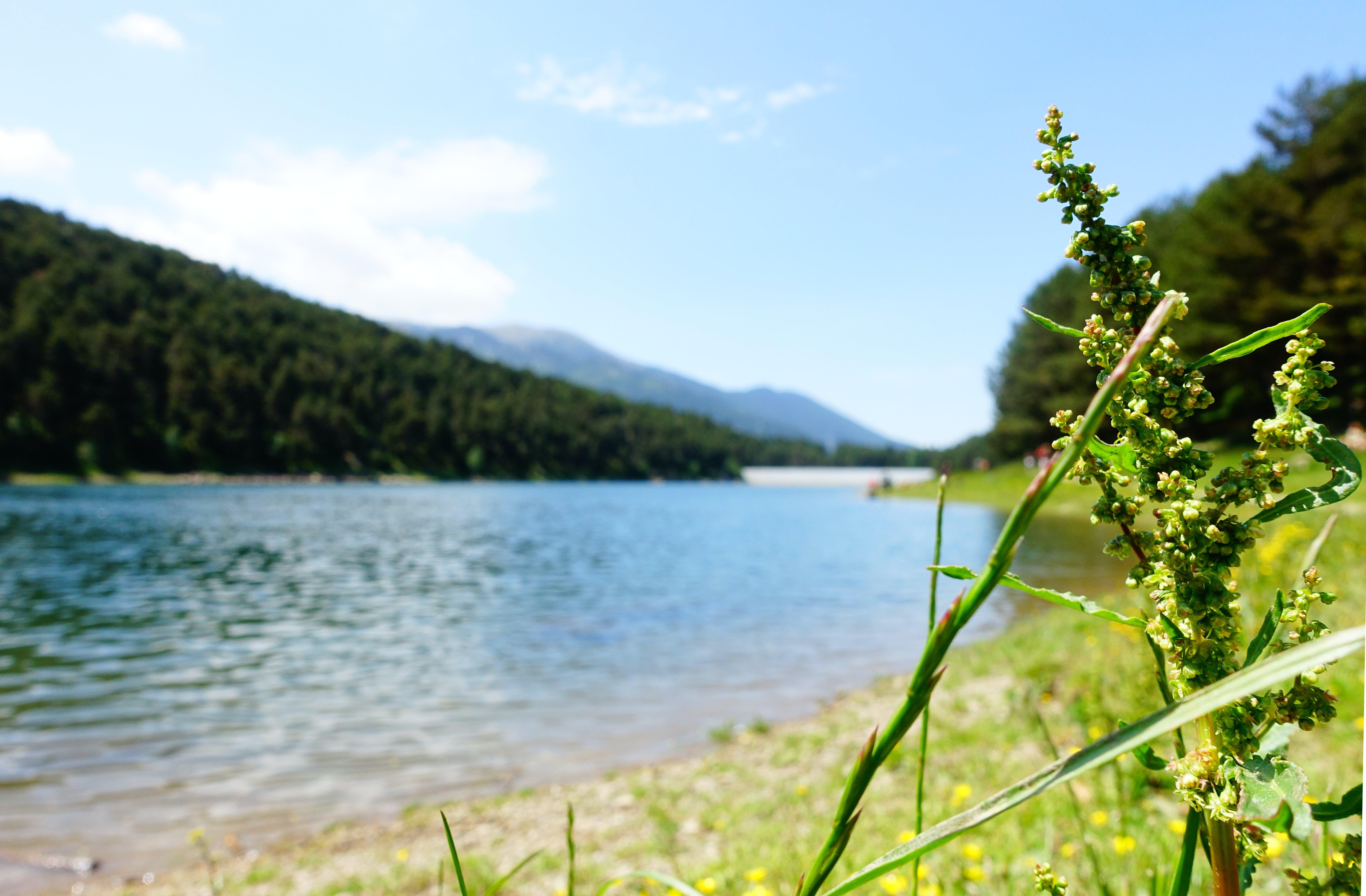 Free stock photo of andorra, lake, low angle photography, nature