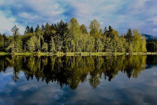Photos gratuites de à feuilles persistantes, arbres, conifères