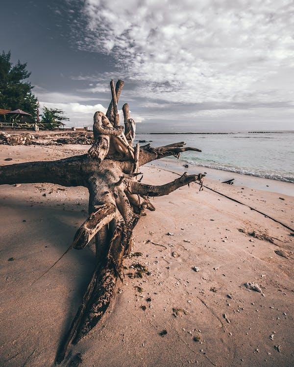 Foto Van Driftwood On Shoreline