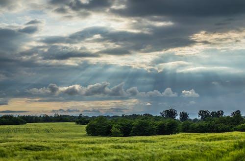 Foto stok gratis alam, awan, bidang, langit