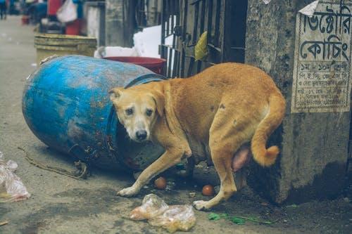伸出援手, 動物, 動物的愛 的 免費圖庫相片