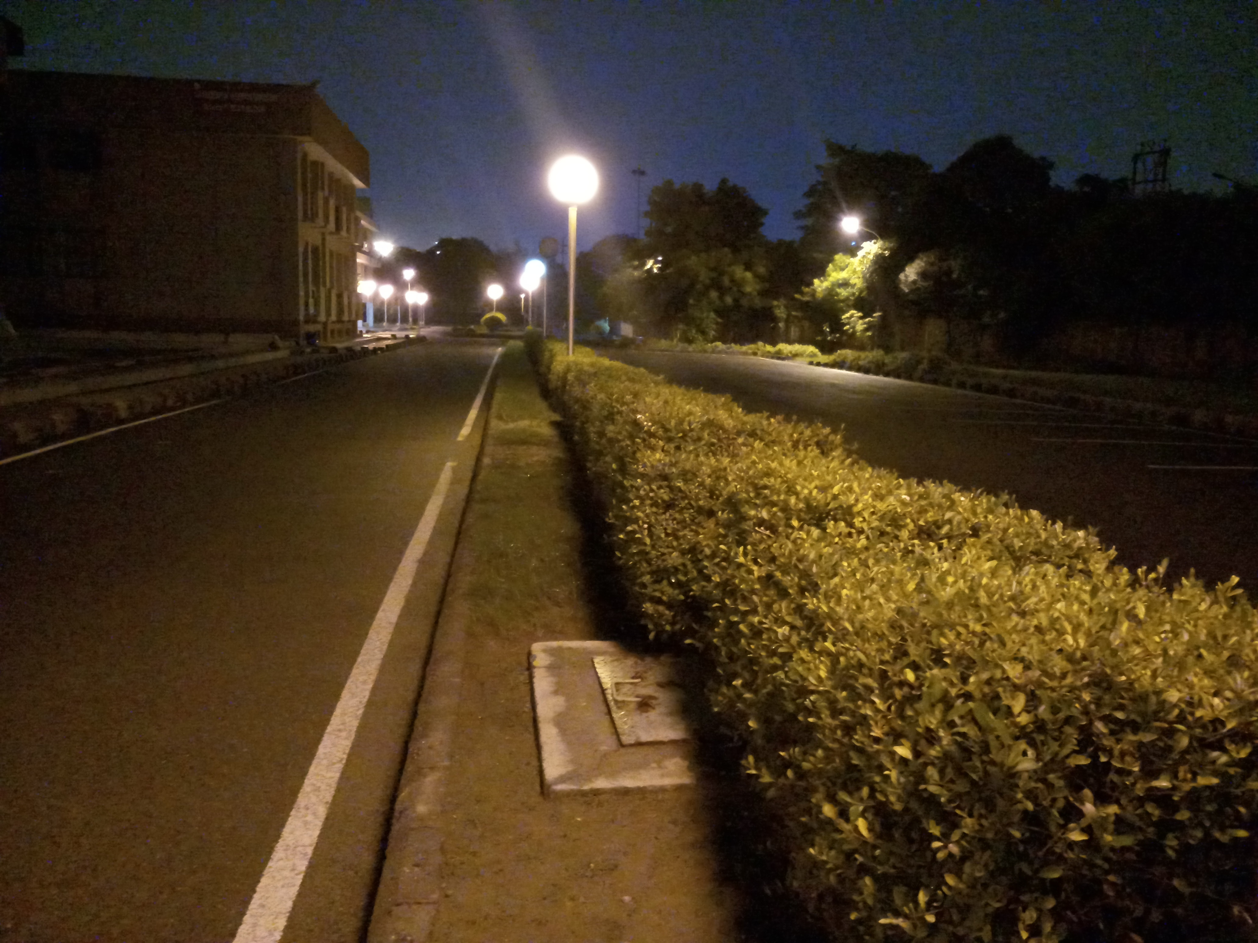 Free stock photo of Night garden