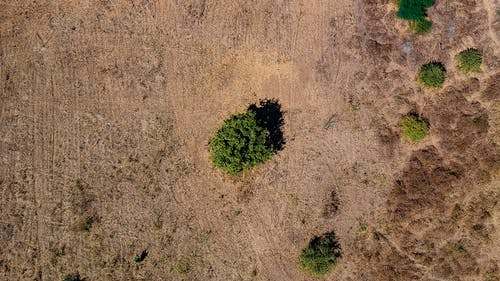 Бесплатное стоковое фото с Аэрофотосъемка, бразилия, вид с квадрокоптера, дрон