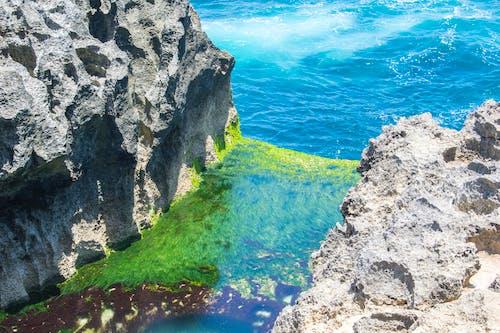 Základová fotografie zdarma na téma moře, vodní rostliny