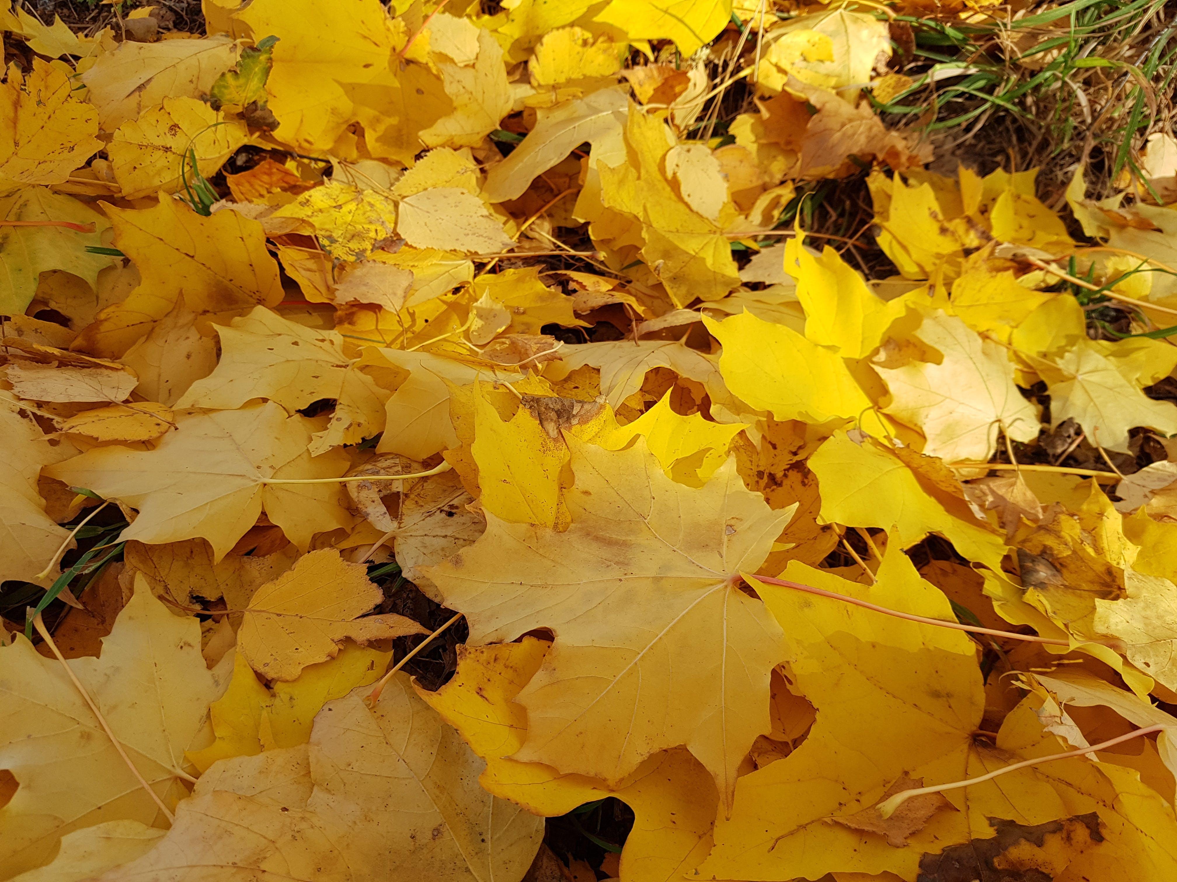 Foto d'estoc gratuïta de colors de tardor, groc