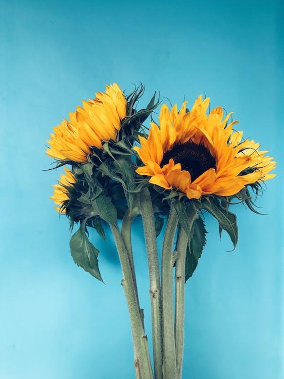 букет, букет цветов, желтые цветы