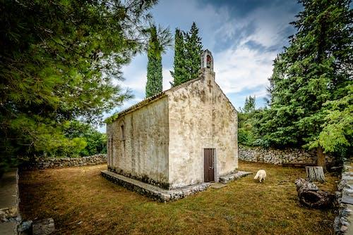 亞得里亞海島嶼, 孤獨的狗, 帕什曼島, 老教堂 的 免費圖庫相片