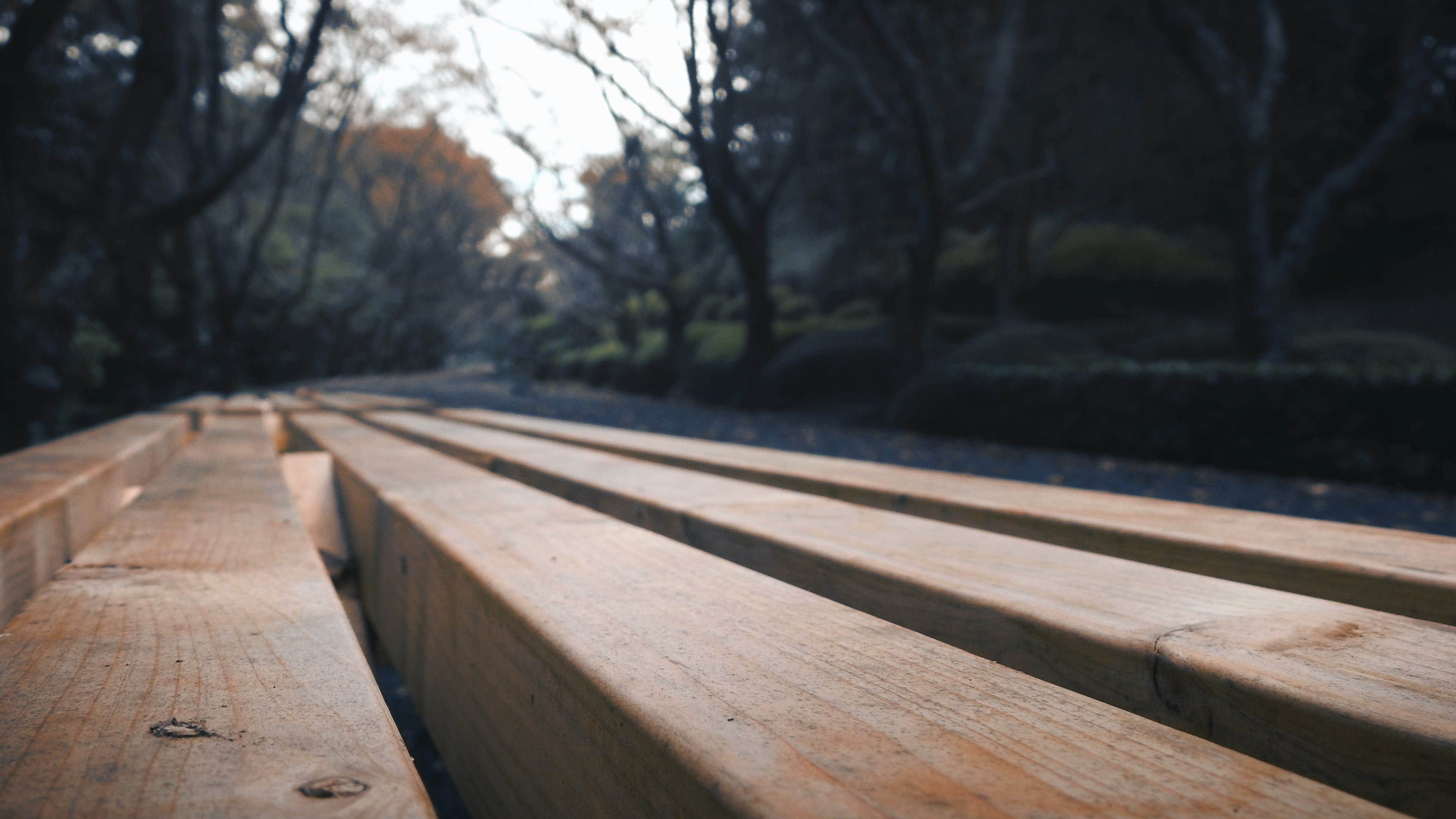 Free stock photo of bench, forest, trees, wood