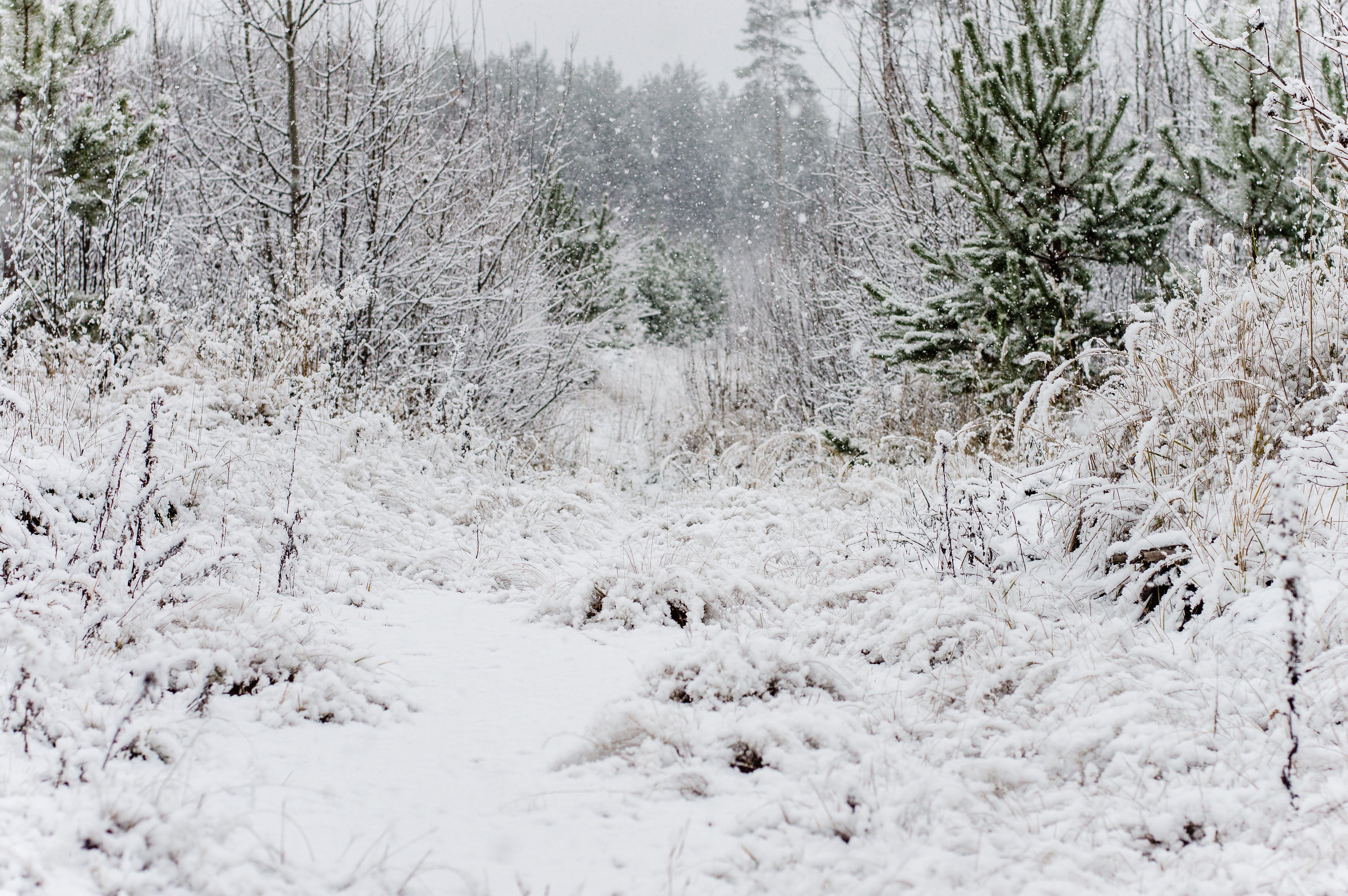 Fotobanka sbezplatnými fotkami na tému biela, chladný, krajina, krajinka