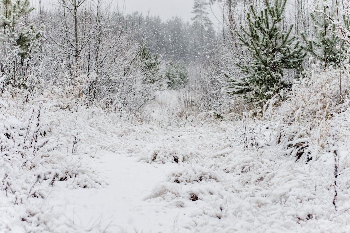 arbres, blanc, branques