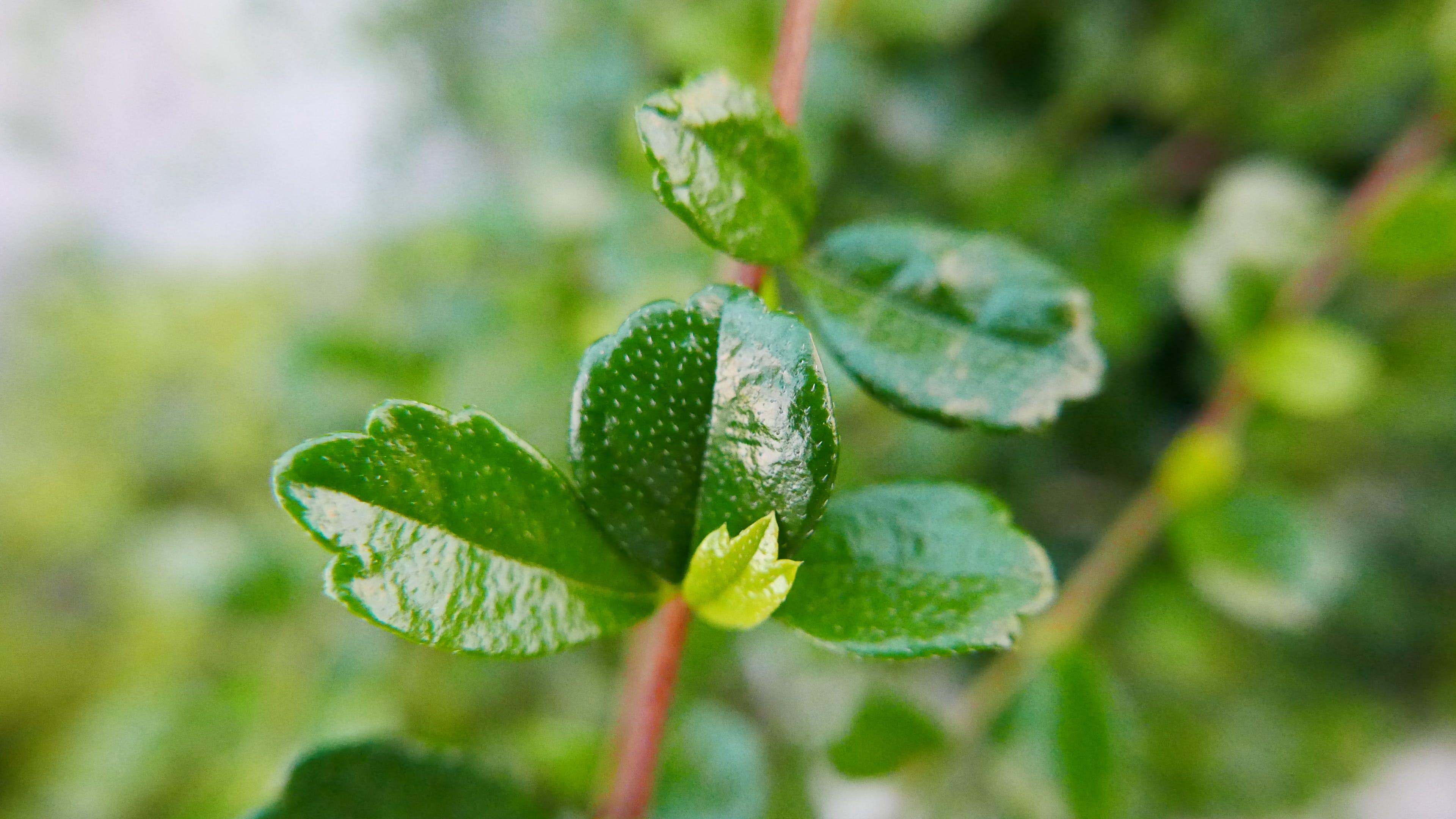 Základová fotografie zdarma na téma bujný, bylinka, bylinný, ostření