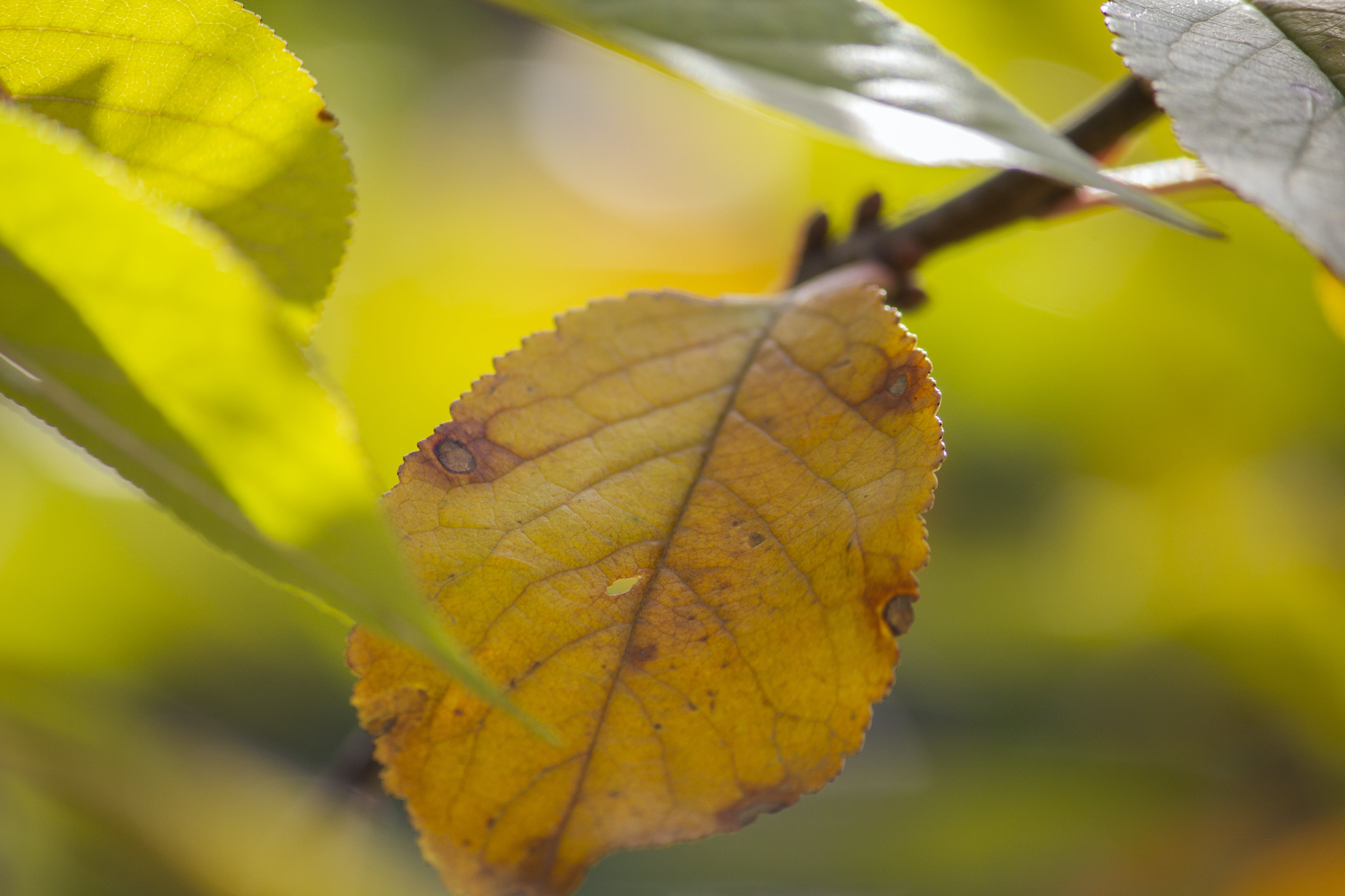 Free stock photo of autumn, branch, dry, leaf