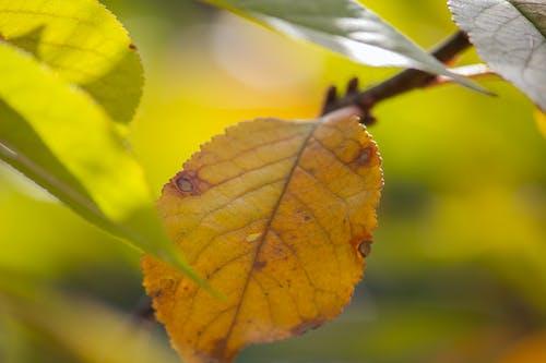 Бесплатное стоковое фото с ветвь, сухой