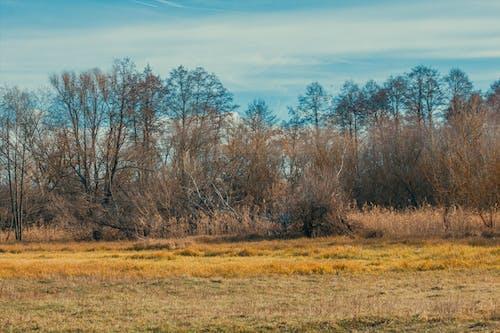 คลังภาพถ่ายฟรี ของ ต้นไม้, ท้องฟ้า, ธรรมชาติ, สีเหลือง
