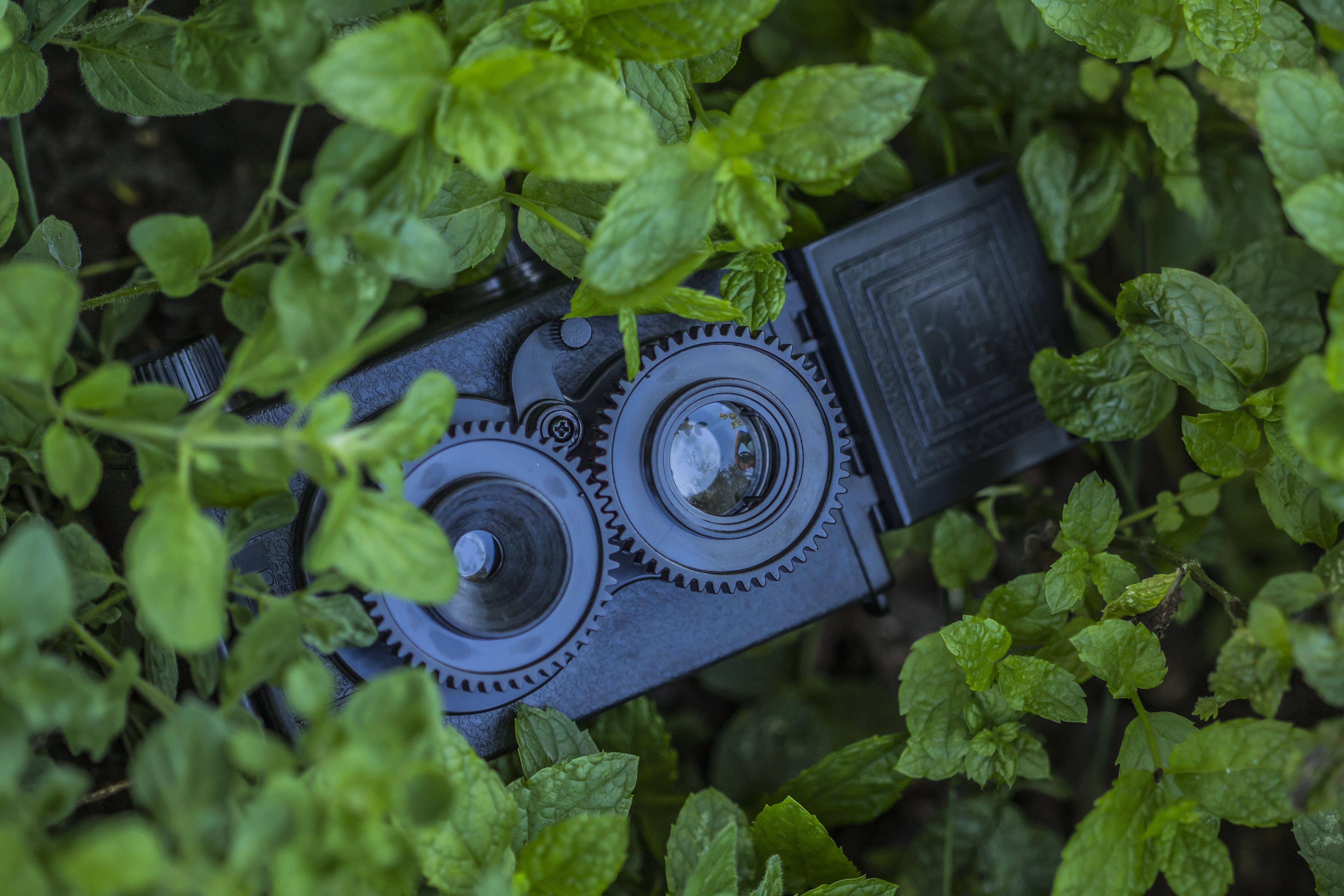 Kostenloses Stock Foto zu kamera, nahansicht, pflanze, vintage
