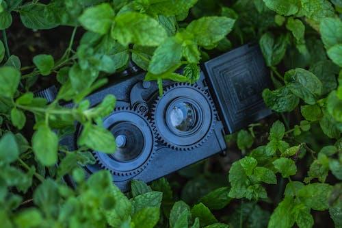 Security Camera Hidden Behind Plants