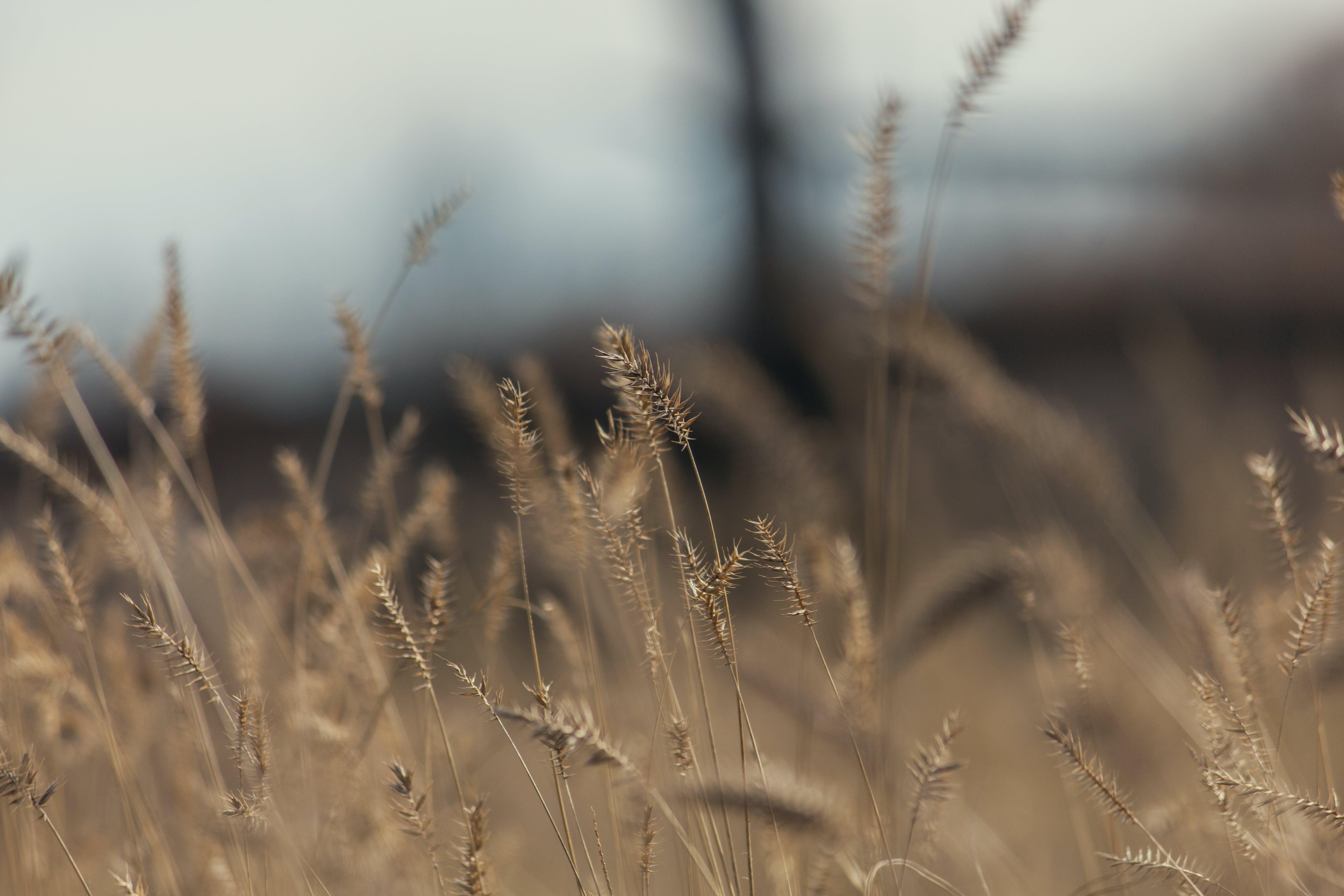 Free stock photo of autumn, dry, grass, nature