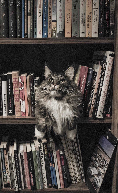 Comportamiento en gatos