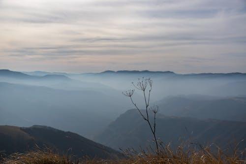 多雲的天空, 有霧, 自然攝影, 花 的 免费素材照片