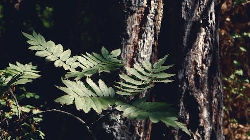 Gratis lagerfoto af 4k-baggrund, skov, træ
