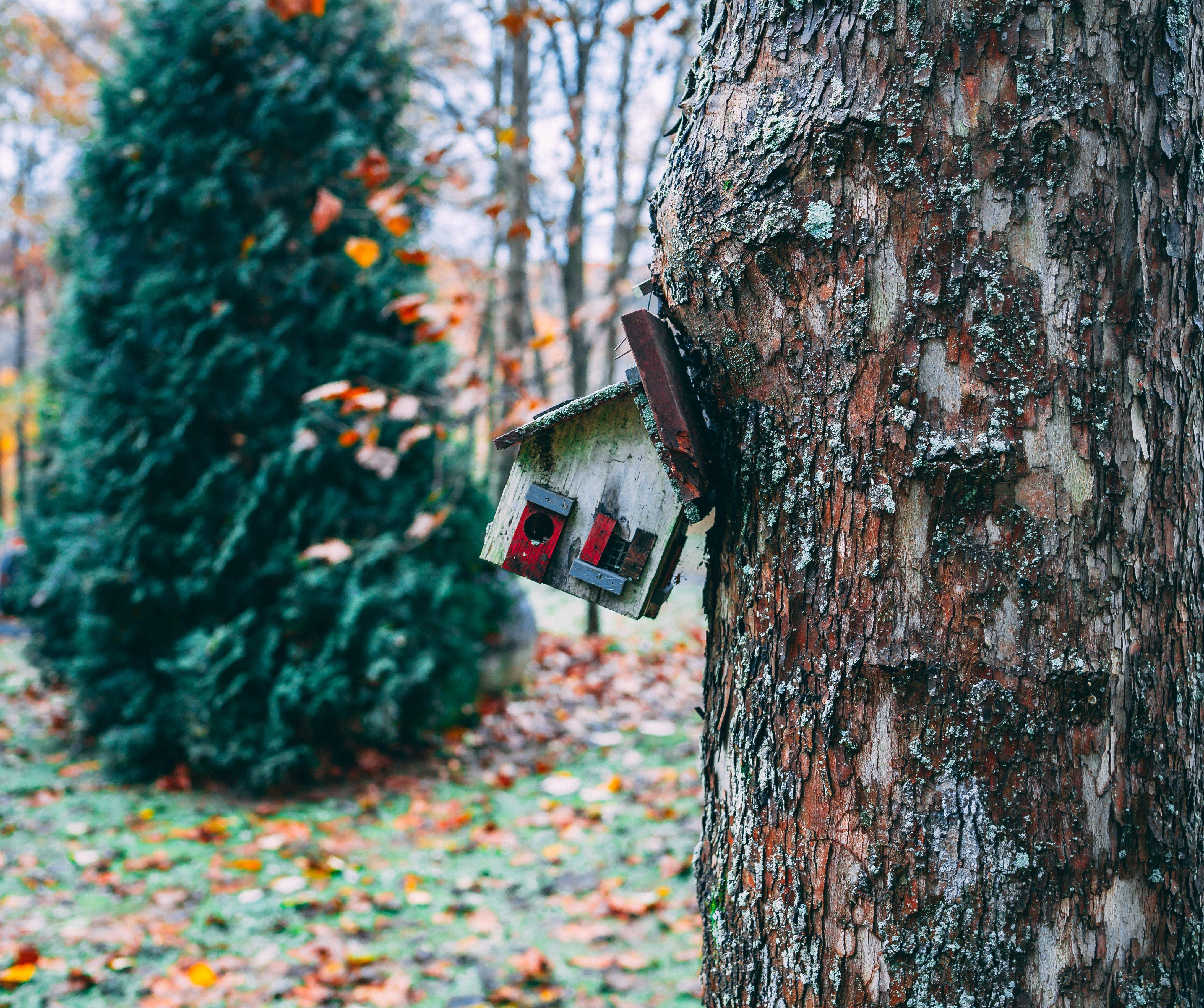Christmas Tree Near House Figurine