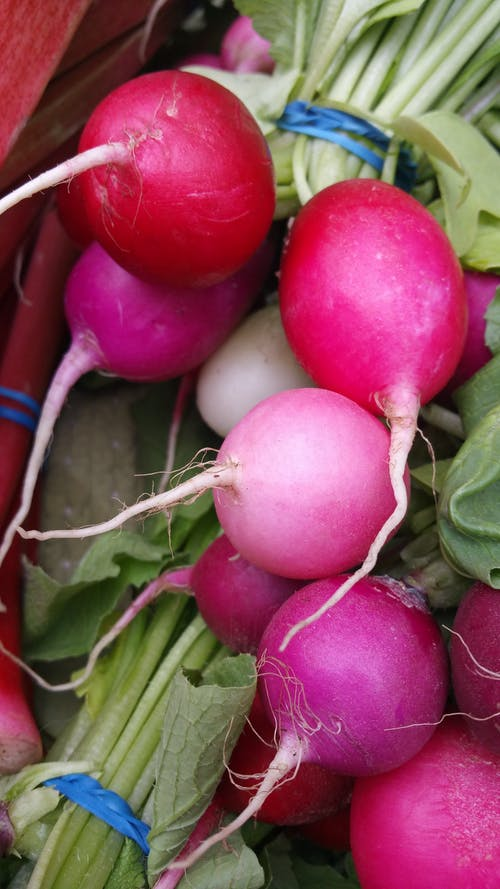 Free stock photo of farm produce, food, market
