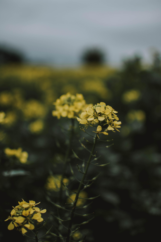 Ilmainen kuvapankkikuva tunnisteilla kasvi, kasvikunta, keltainen, kukat