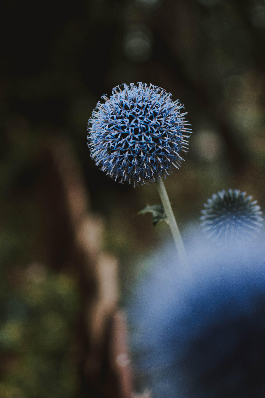 Blue Flowers Blooming