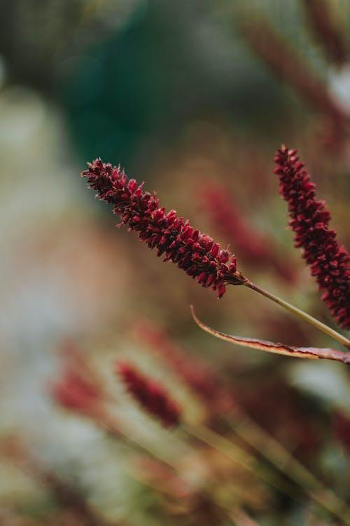 Ảnh lưu trữ miễn phí về cây, hệ thực vật, hoa, Hoa đỏ