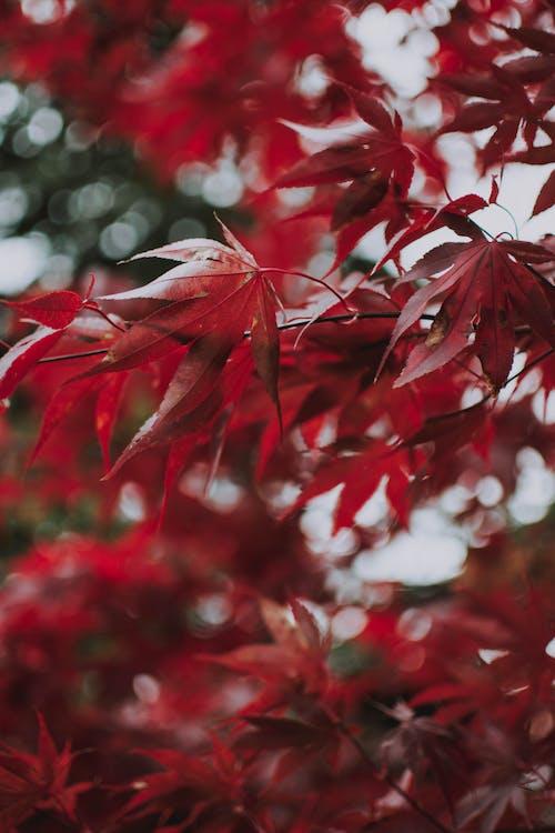 Photos gratuites de arbre, couleur, dynamique, feuilles d'érable
