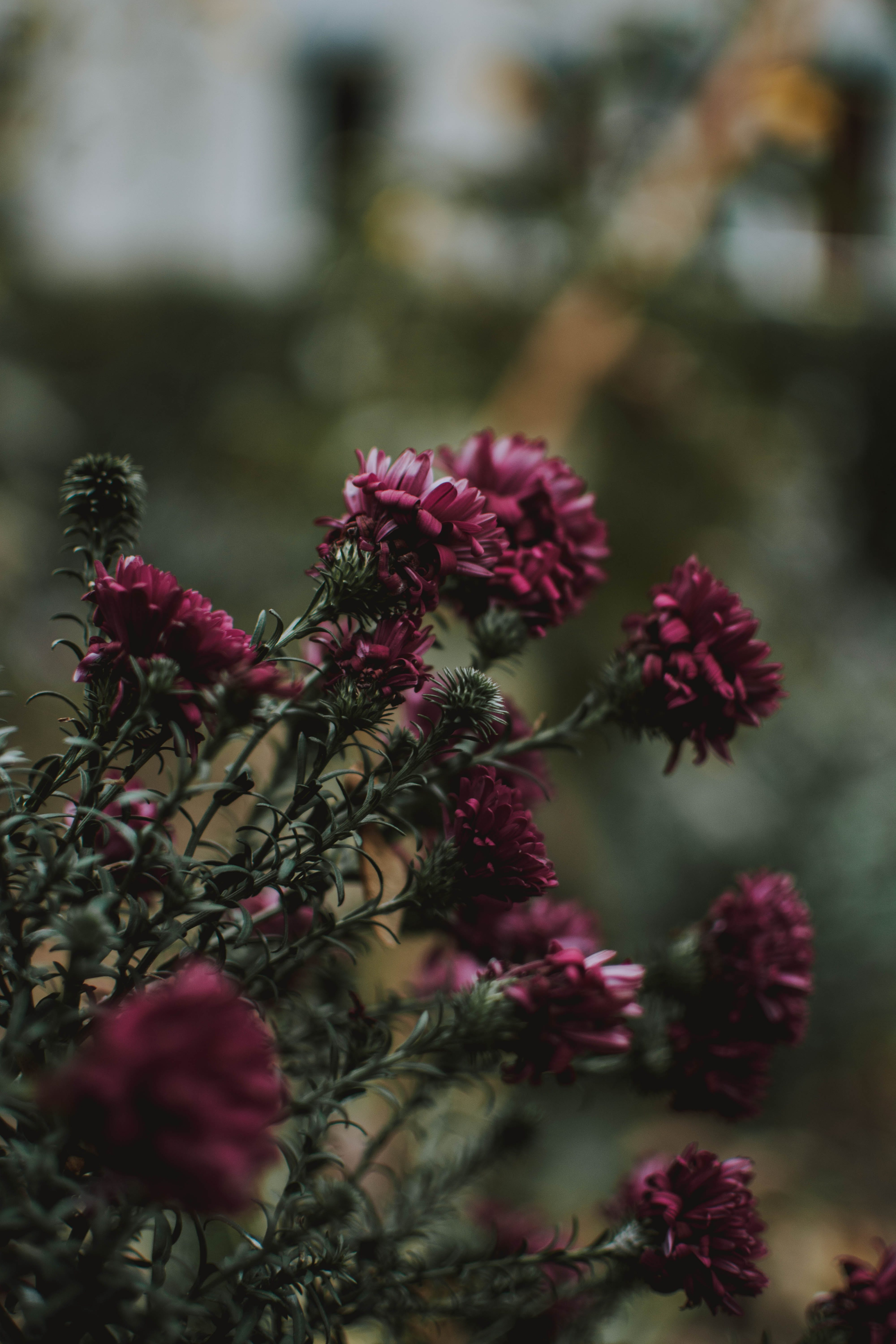 Pink Flowers In Tilt Shift Lens Photography