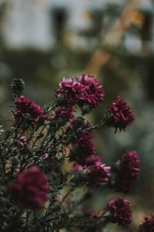 Pink Flowers In Tilt Shift Lens Photography