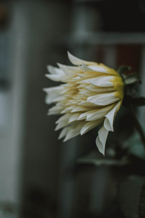 Základová fotografie zdarma na téma barva, bílá, flóra, krásný