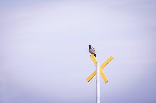 Безкоштовне стокове фото на тему «Денне світло, дорожній знак, птах, пташиний»