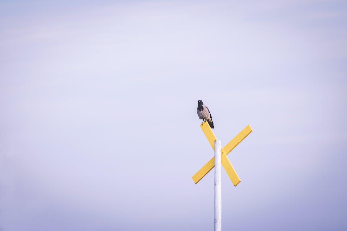 日光, 棲息的鳥, 路標