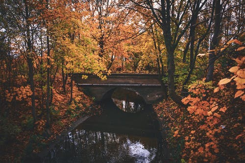 Gratis arkivbilde med årstid, blader, bro, daggry