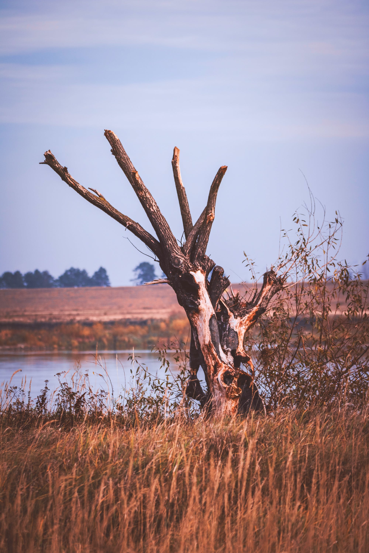 Bare Tree Beside Body of Water
