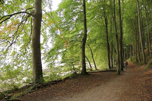 Gratis lagerfoto af skov, toomaj f bungs, tyskland, vandrer