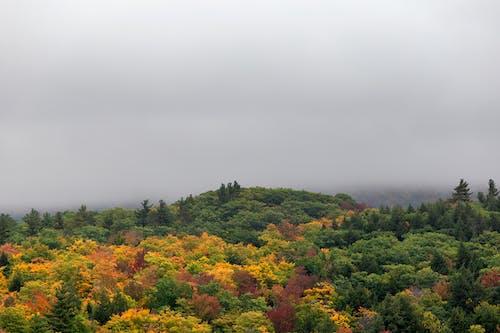 Fotos de stock gratuitas de amanecer, arboles, bosque, brillante