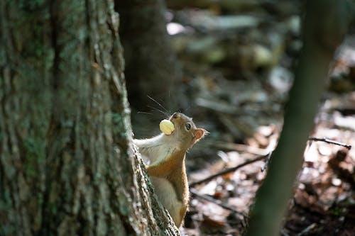 Foto d'estoc gratuïta de animal, arbre, bosc, boscos